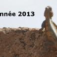 Les équipes de SITALA en France et au Burkina Faso vous souhaitent une belle et heureuse année 2013